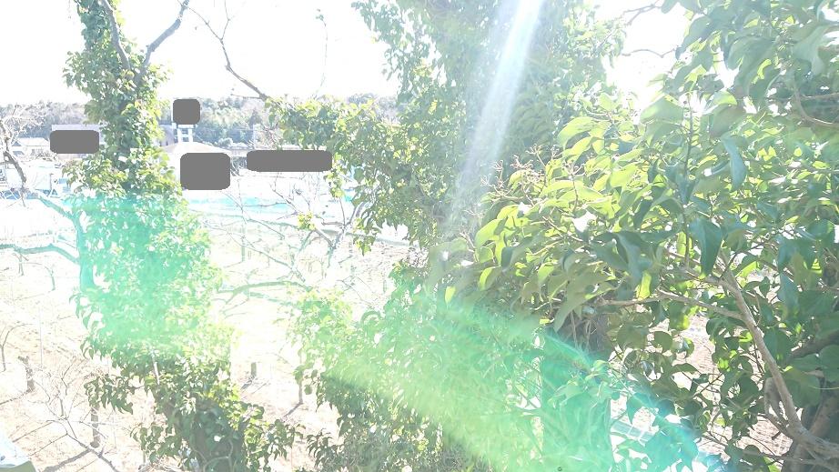 f:id:kinoboriyoshi:20210211214529j:plain