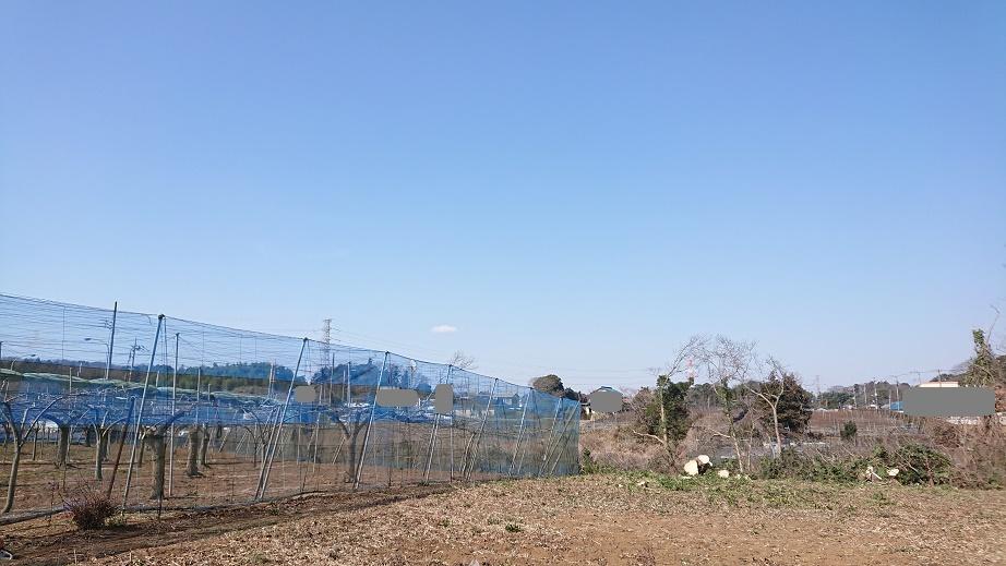 f:id:kinoboriyoshi:20210211220544j:plain