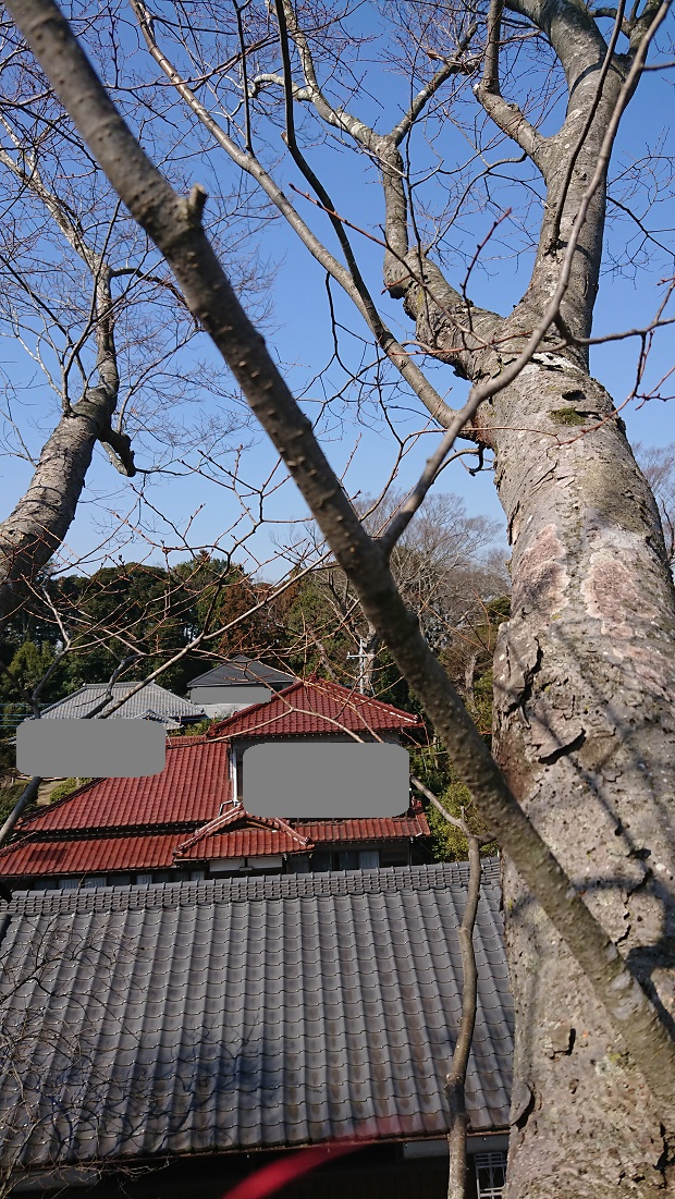 f:id:kinoboriyoshi:20210222202436j:plain