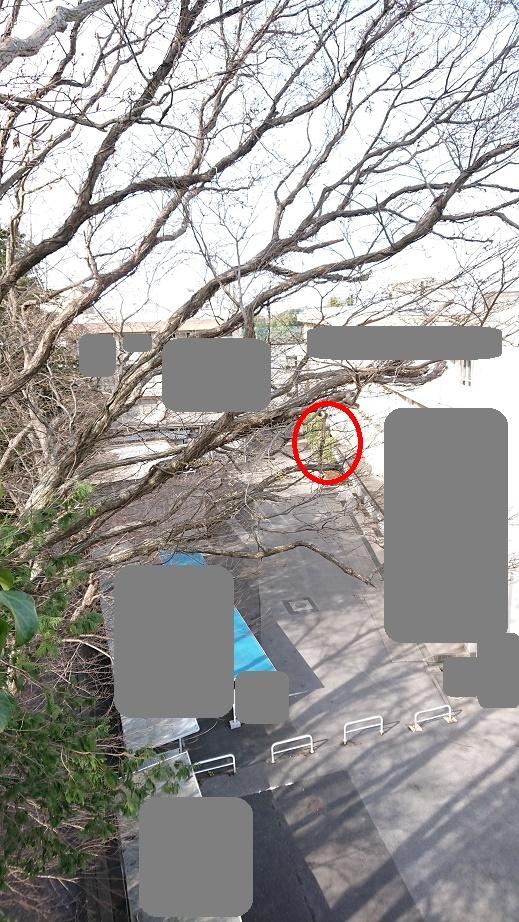 f:id:kinoboriyoshi:20210227233651j:plain