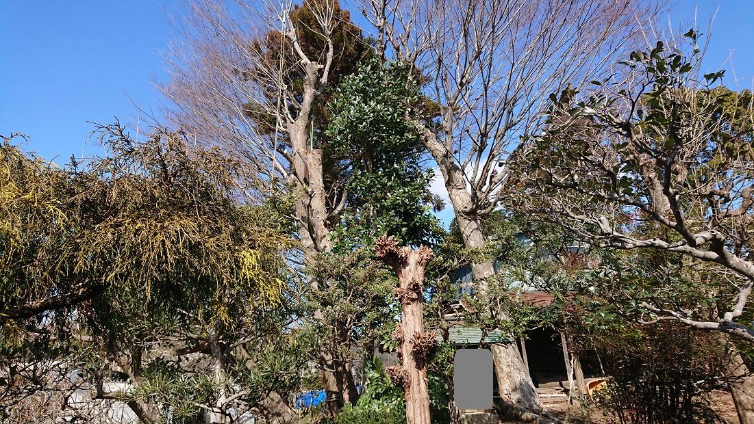f:id:kinoboriyoshi:20210228224950j:plain