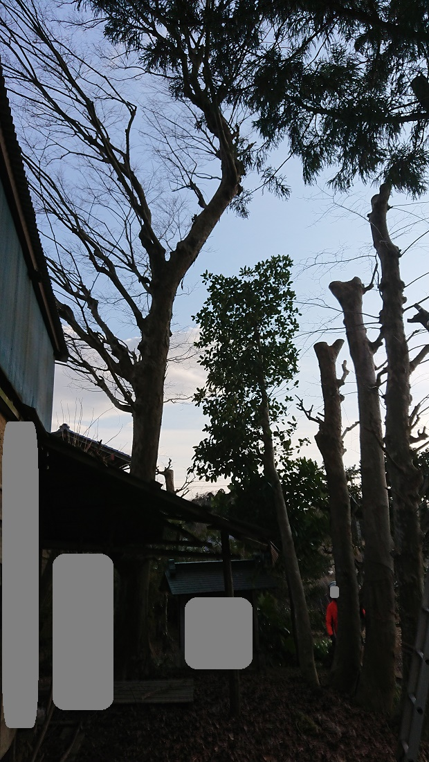 f:id:kinoboriyoshi:20210228225848j:plain