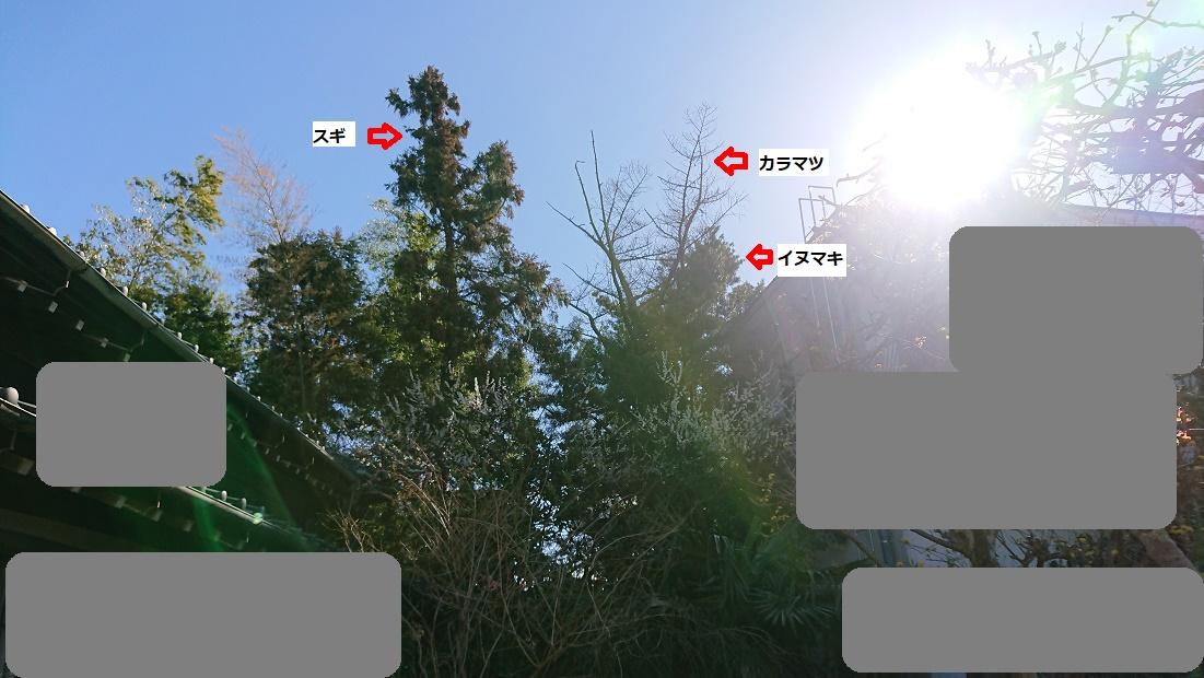 f:id:kinoboriyoshi:20210304212754j:plain
