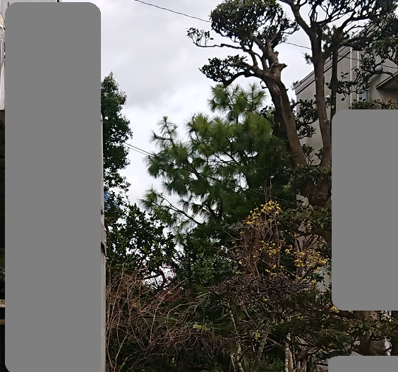 f:id:kinoboriyoshi:20210304215427j:plain
