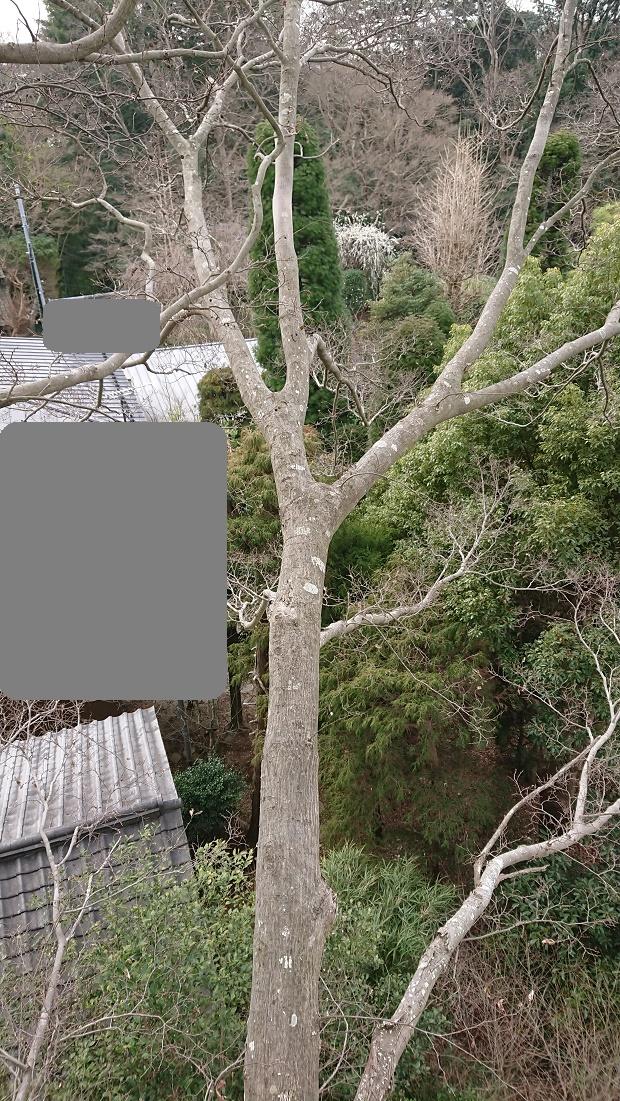 f:id:kinoboriyoshi:20210305234751j:plain