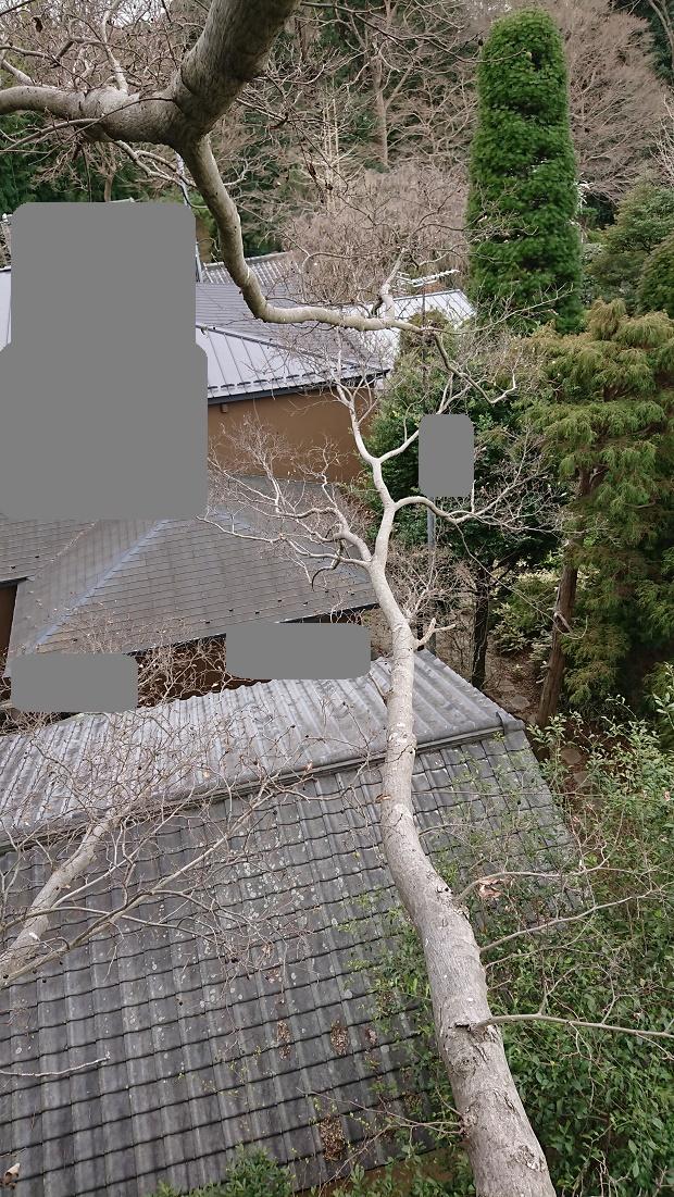 f:id:kinoboriyoshi:20210306000056j:plain