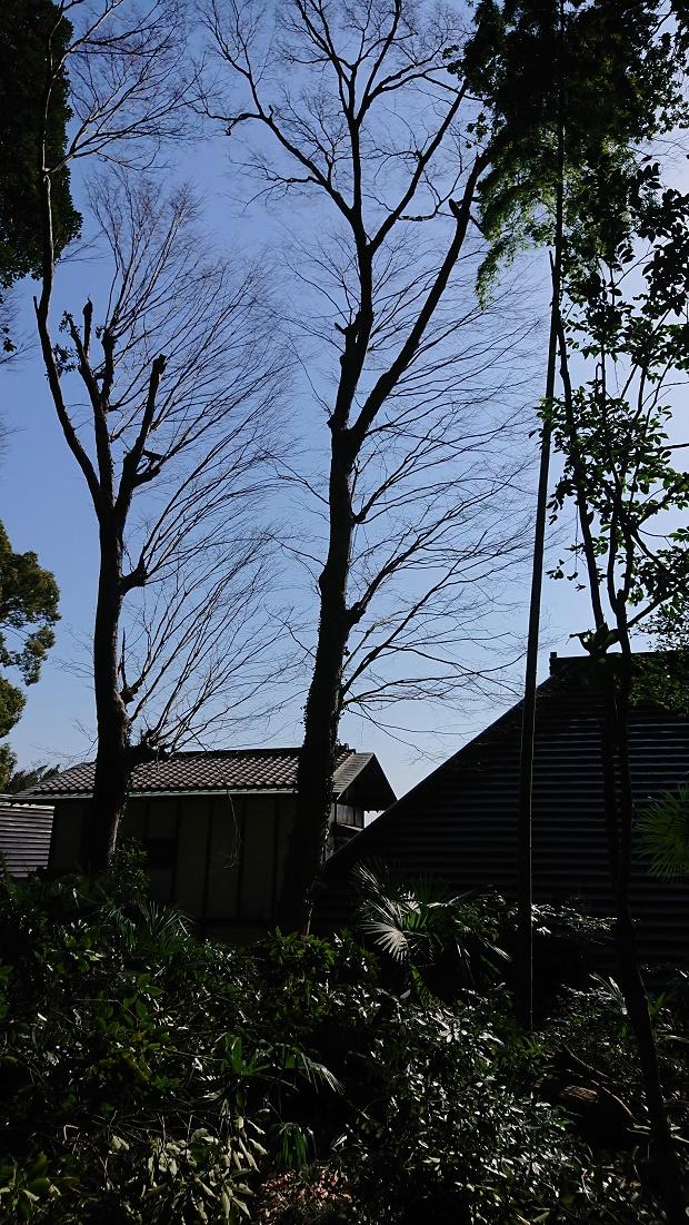 f:id:kinoboriyoshi:20210310222754j:plain