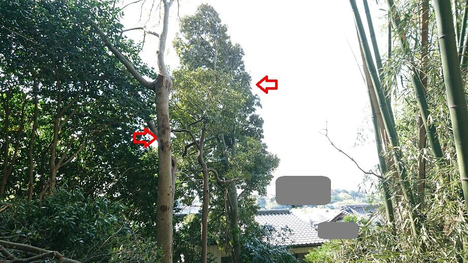 f:id:kinoboriyoshi:20210412215803j:plain