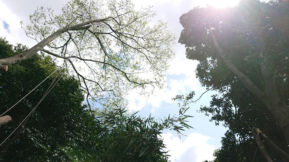f:id:kinoboriyoshi:20210412220606j:plain