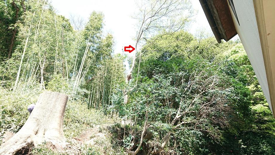 f:id:kinoboriyoshi:20210416230344j:plain