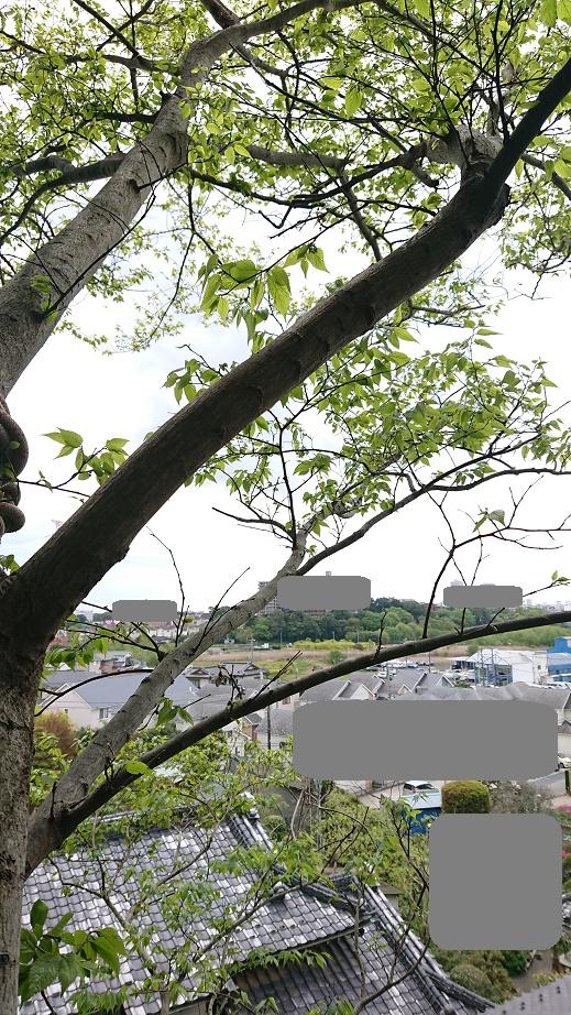 f:id:kinoboriyoshi:20210416233912j:plain