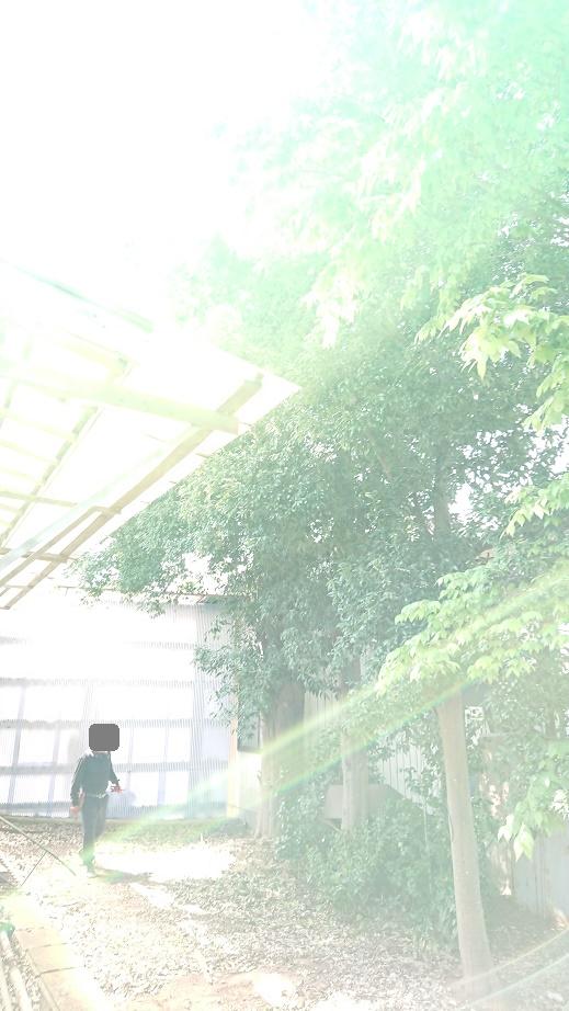 f:id:kinoboriyoshi:20210420221607j:plain