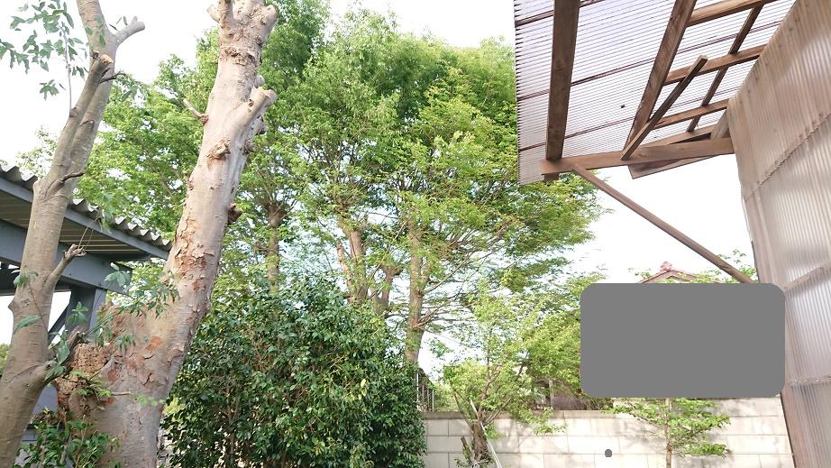 f:id:kinoboriyoshi:20210424224630j:plain