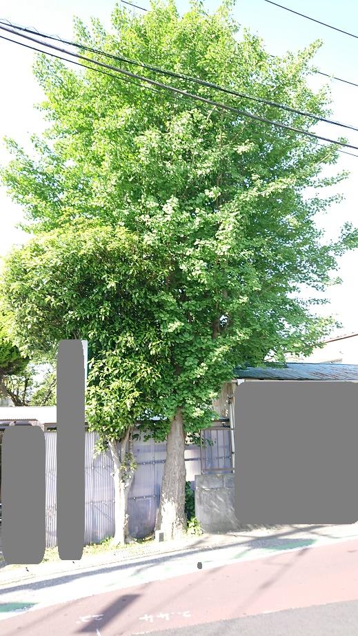 f:id:kinoboriyoshi:20210424225016j:plain