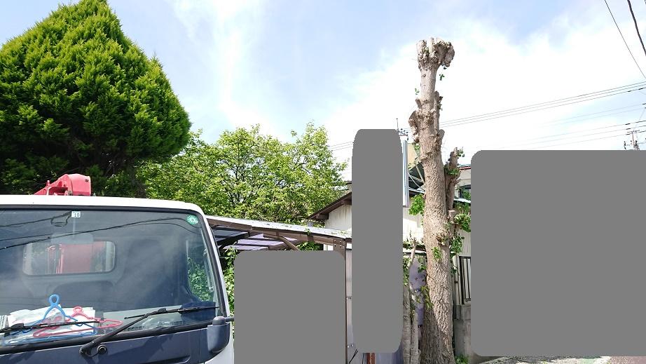 f:id:kinoboriyoshi:20210424225559j:plain