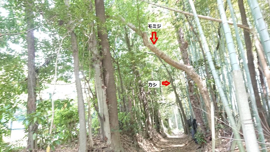 f:id:kinoboriyoshi:20210505203357j:plain