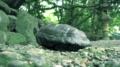 熱田神宮と亀