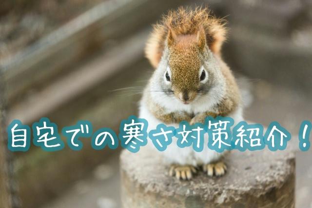 f:id:kinomi503:20161108232524j:plain