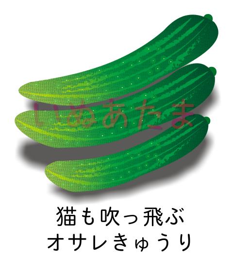 f:id:kinosefaru:20210501160655j:plain