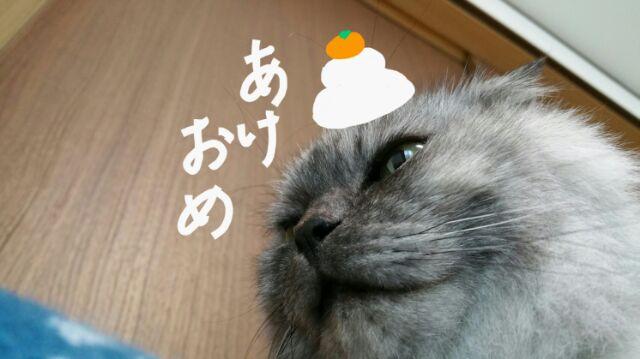 f:id:kinoshitakonoki:20180102101018j:plain