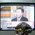[TV]20110723