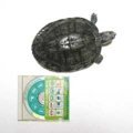 [CD]20120807