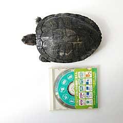 f:id:kintaorgH:20121102170942j:image:left