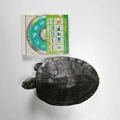 [CD]20130104