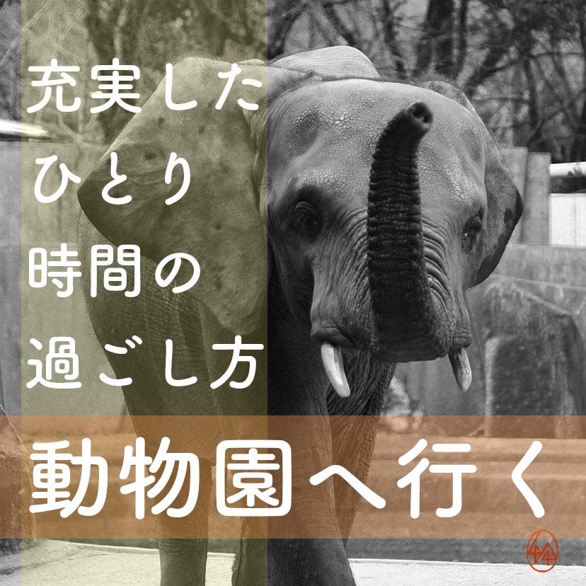 f:id:kinuyahiro:20190608180208j:plain