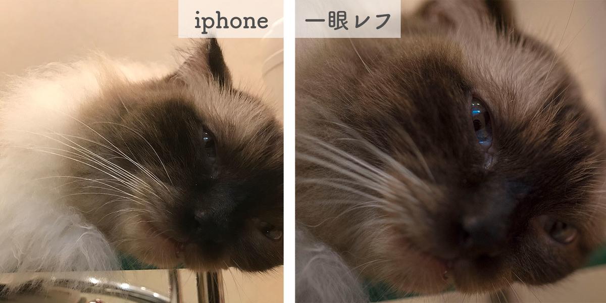 f:id:kinuyahiro:20190614233313j:plain