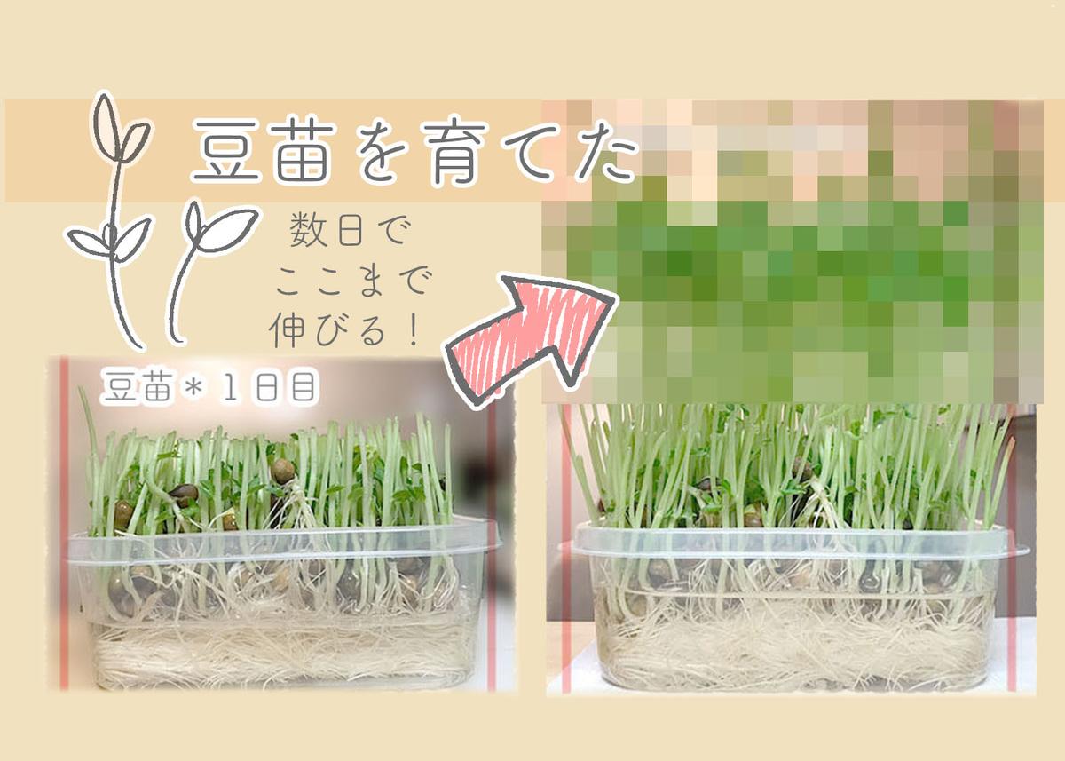 f:id:kinuyahiro:20200623191901j:plain
