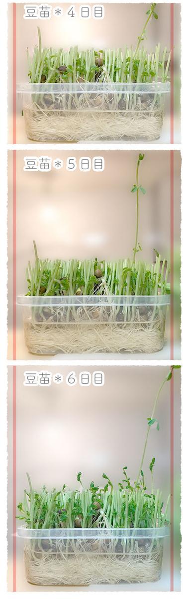 f:id:kinuyahiro:20200623191932j:plain