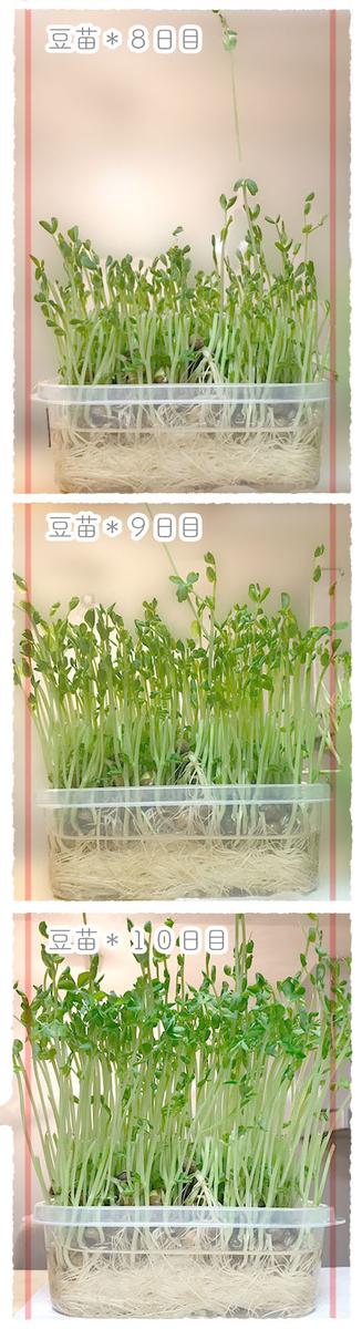 f:id:kinuyahiro:20200623191941j:plain