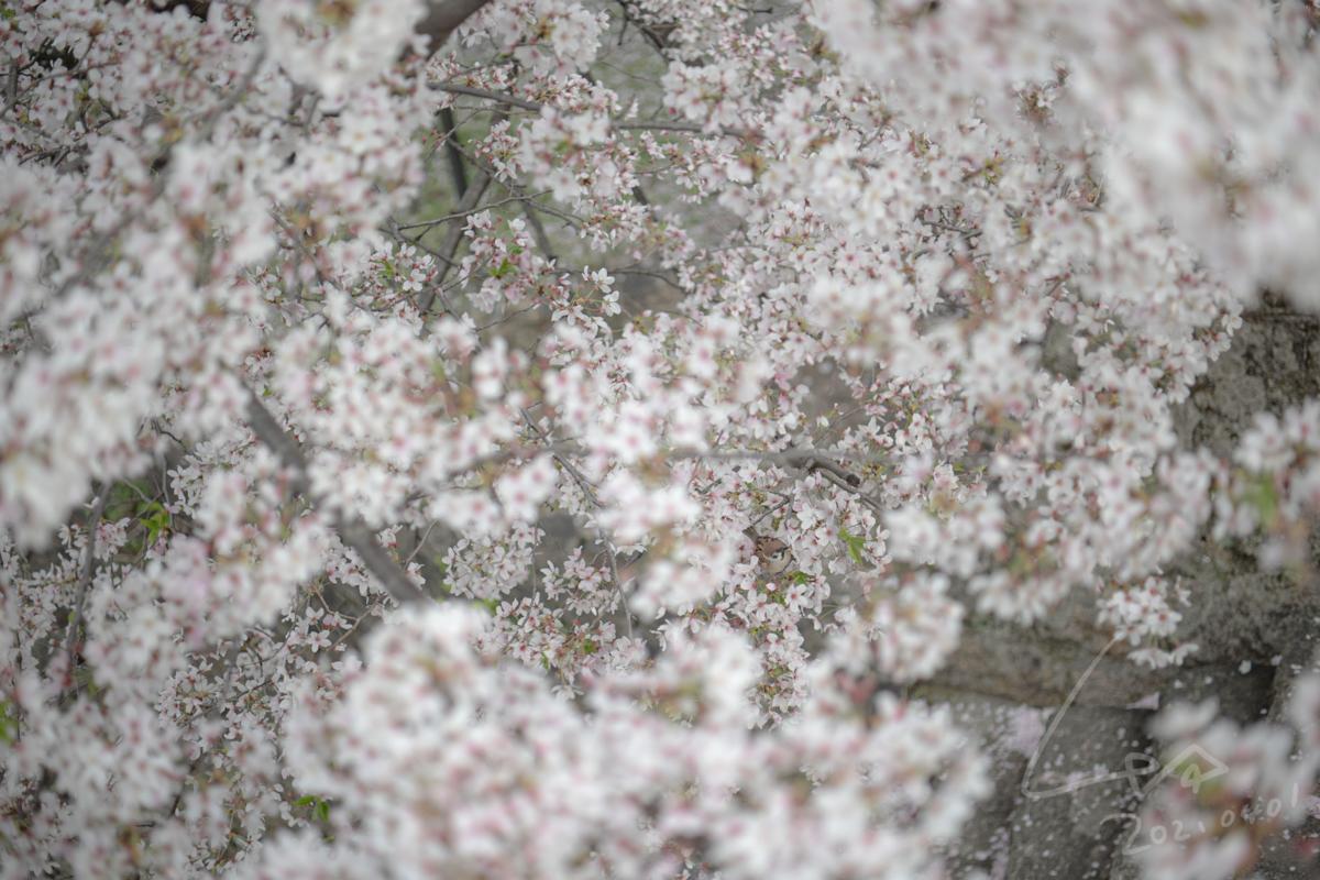 f:id:kinuyahiro:20210401221815p:plain