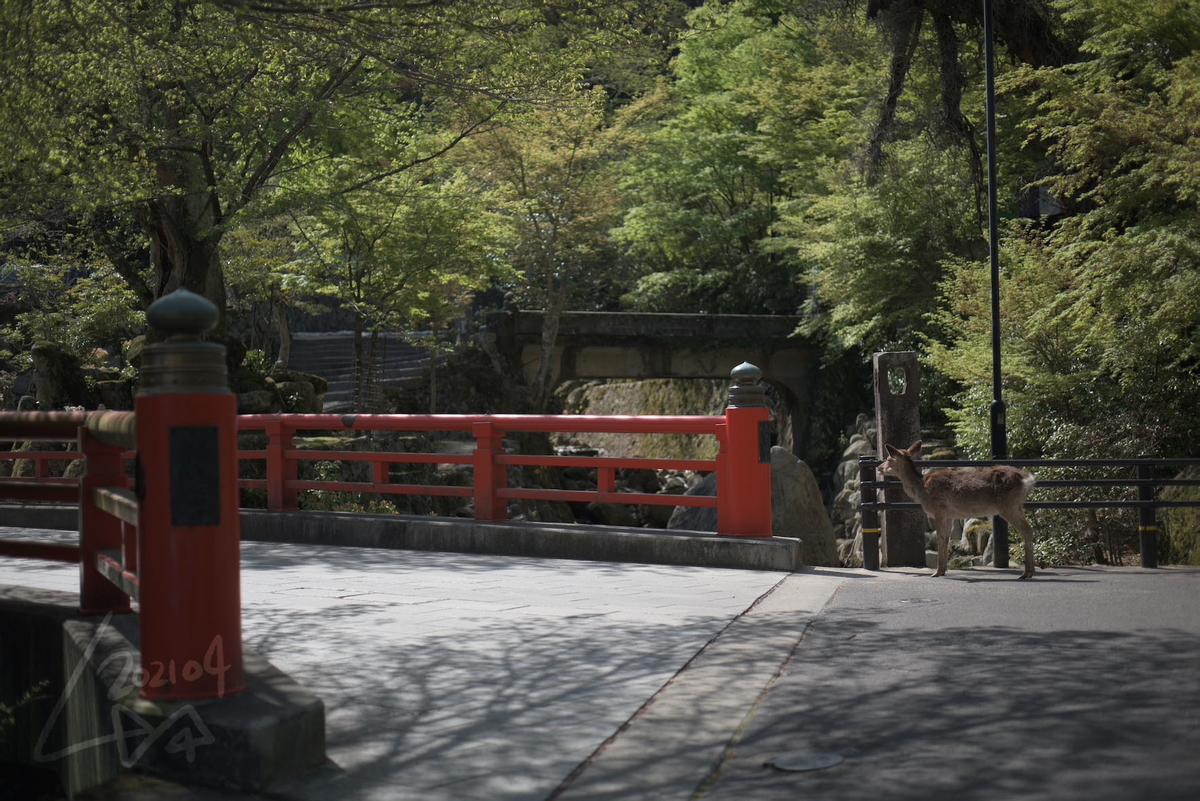 f:id:kinuyahiro:20210418213506j:plain