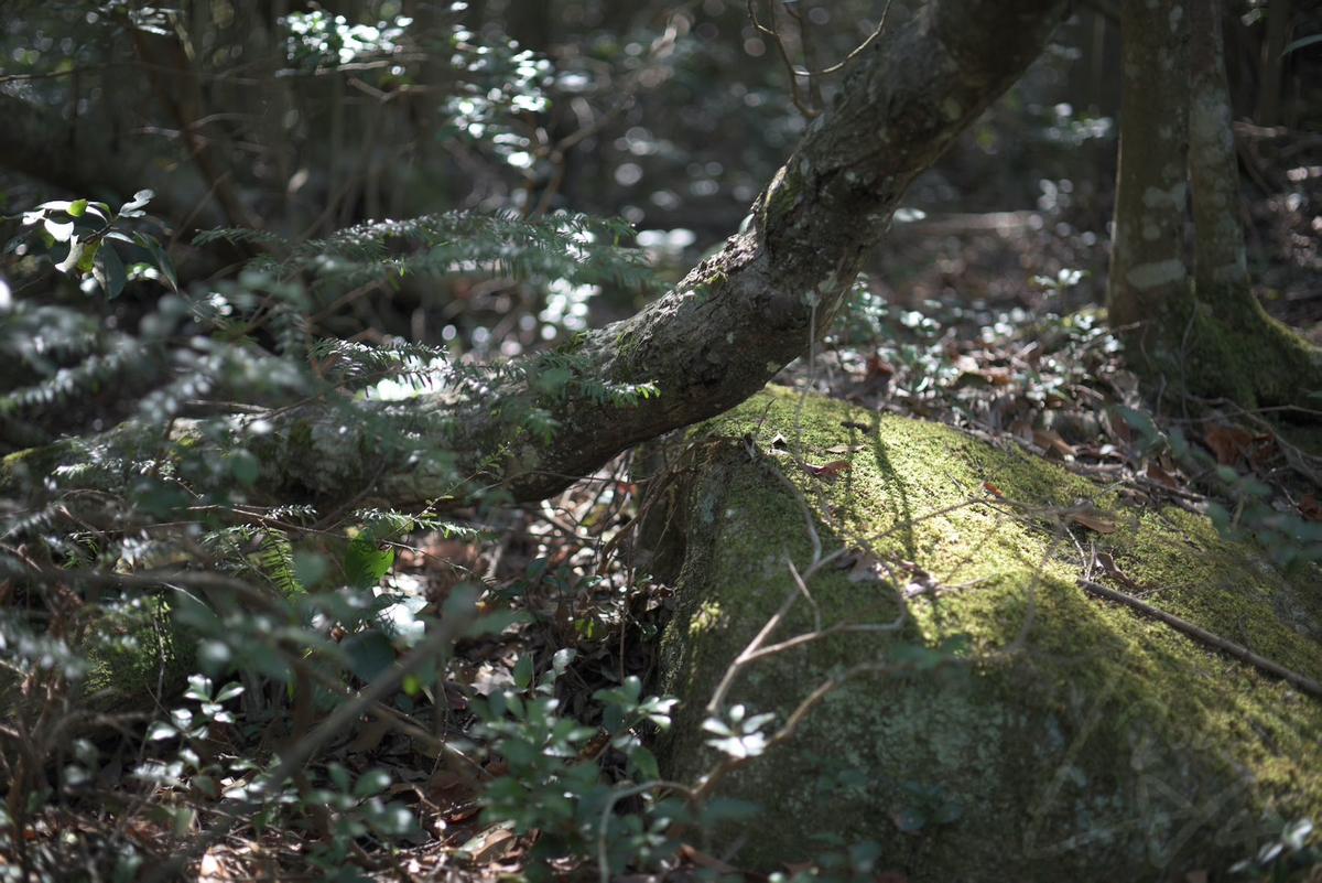 f:id:kinuyahiro:20210424205341j:plain