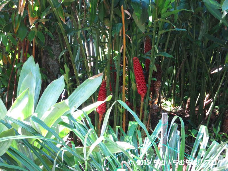 ボタニックガーデンズの生姜の一種の植物