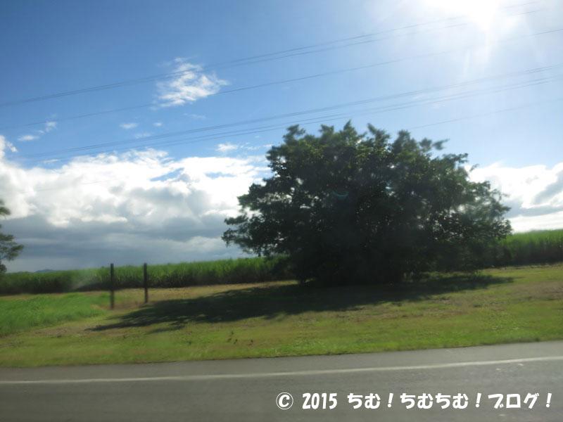 ケアンズの広大なサトウキビ畑