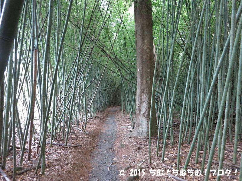 パロネラパーク竹林