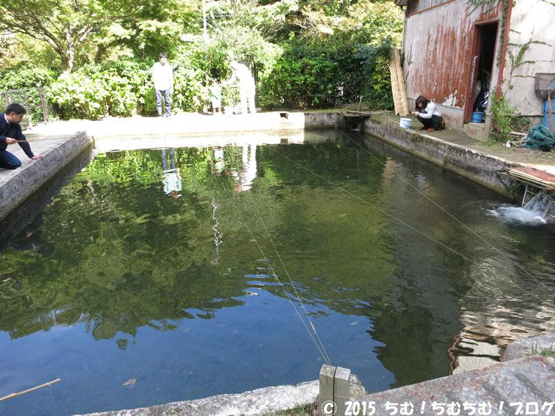 釣り堀池の奥側