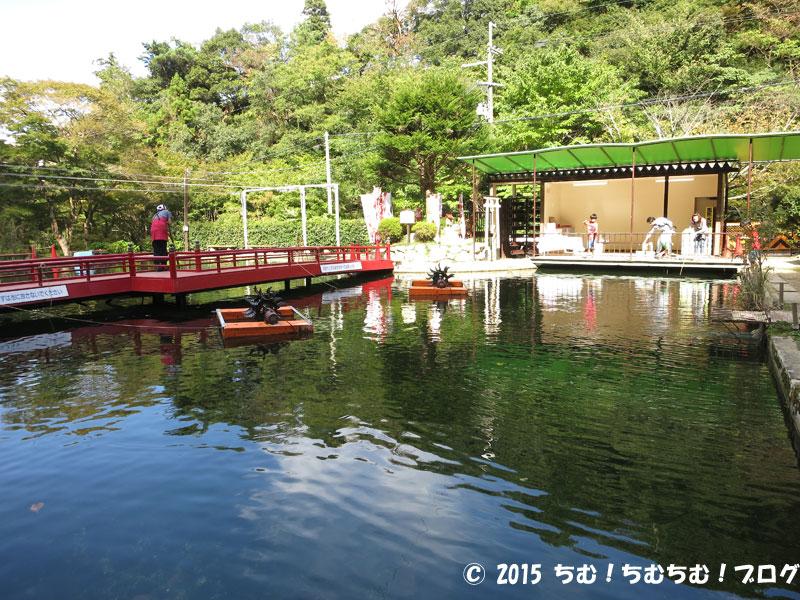 釣り堀池の手前側