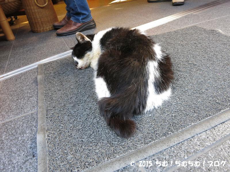 足ふきマットの上で寝てる猫