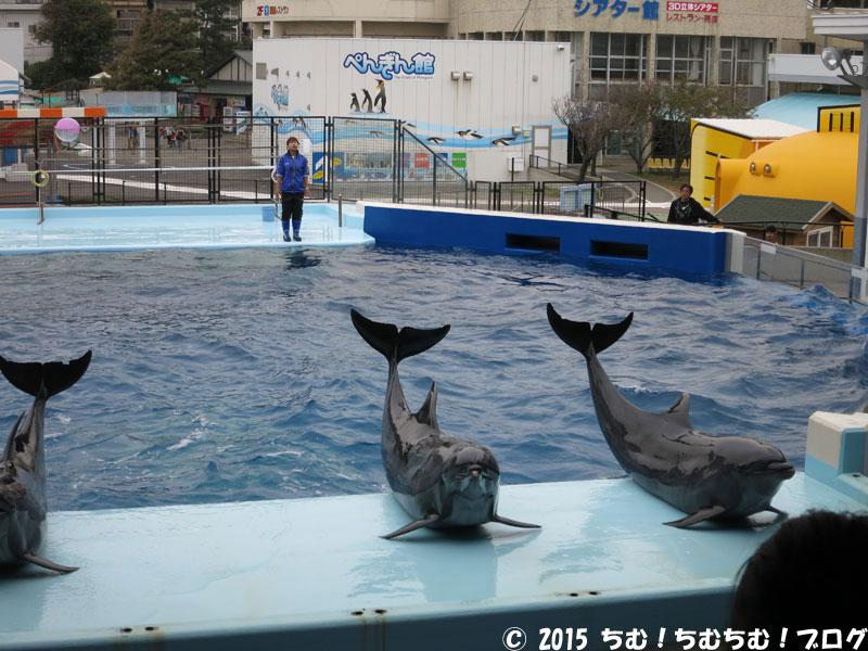 3匹並んだイルカ