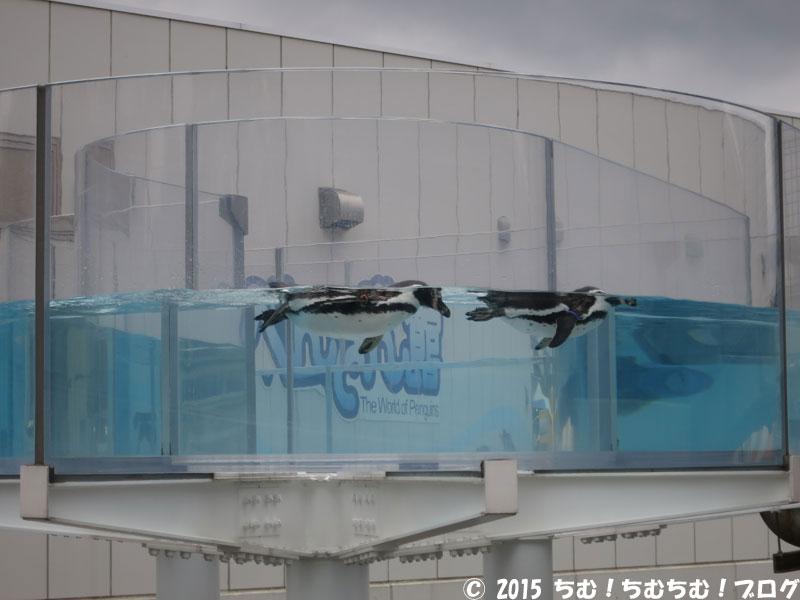 空中プールのペンギン