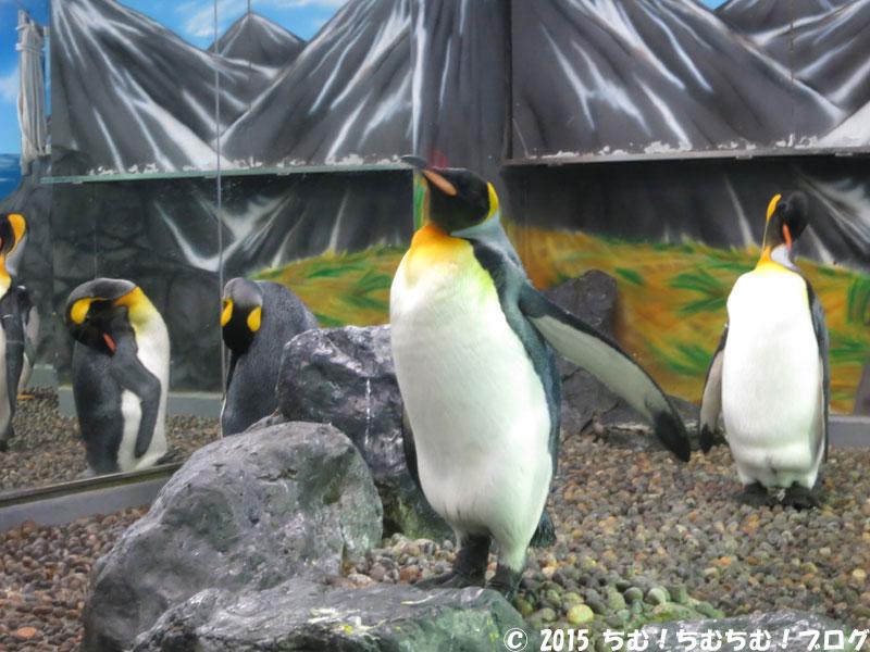 きっちり立っているペンギン
