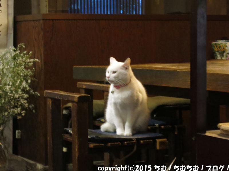 日の出屋の白猫