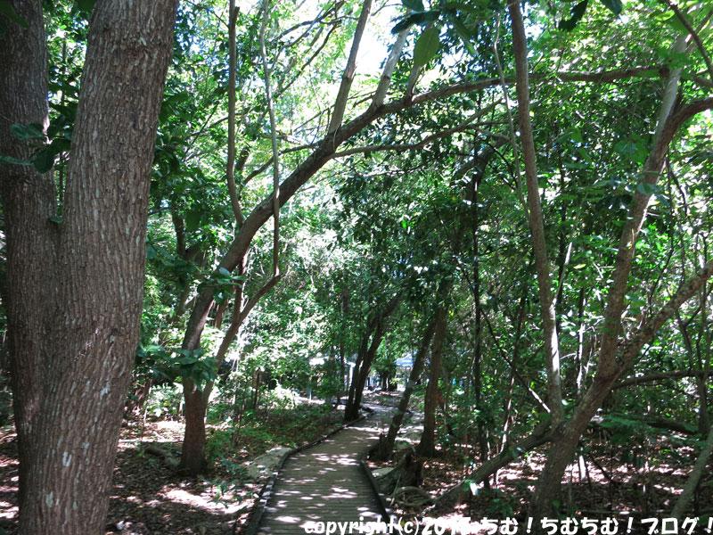グリーン島の林