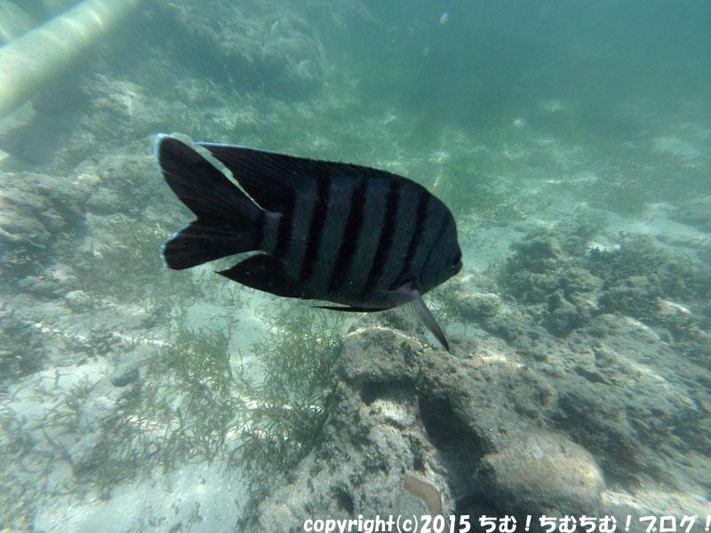 グリーン島の魚のアップ