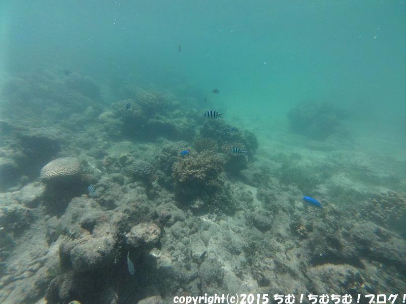 グリーン島の小魚