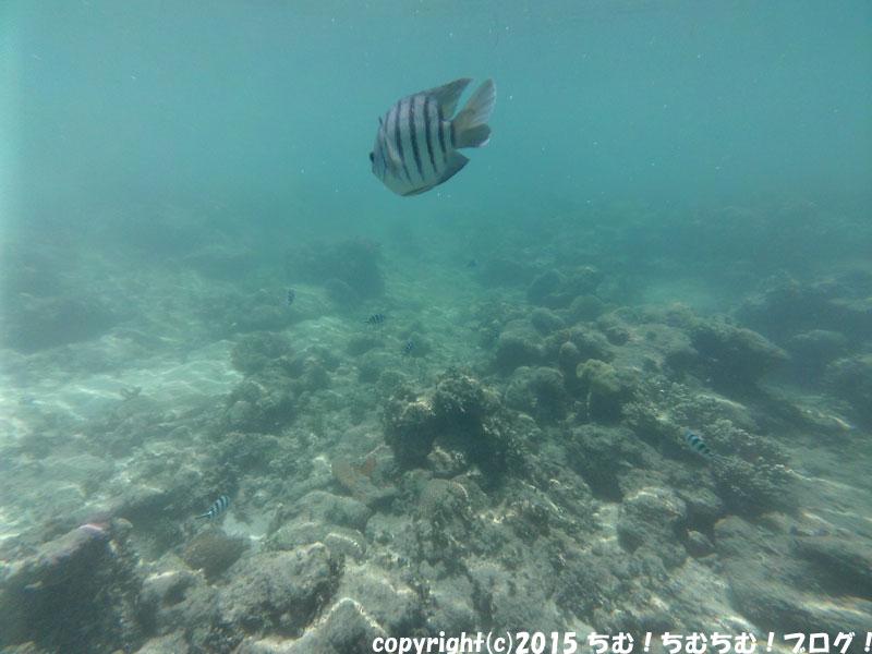 優雅に泳ぐグレートバリアリーフの魚